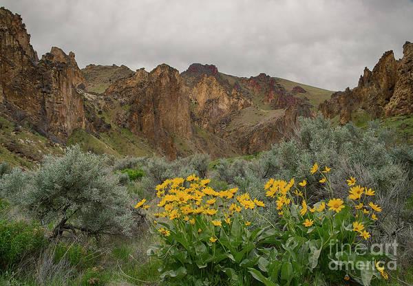 Balsamorhiza Sagittata Photograph - Leslie Gulch Sunflowers by Idaho Scenic Images Linda Lantzy