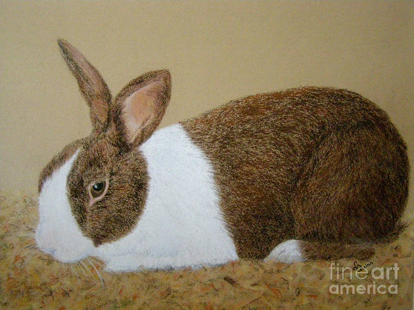 Painting - Les's Rabbit by Lynn Quinn