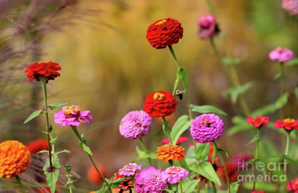 Photograph - Let It Bee by Karen Adams