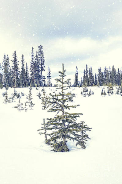 Wall Art - Photograph - Let It Snow by Evelina Kremsdorf