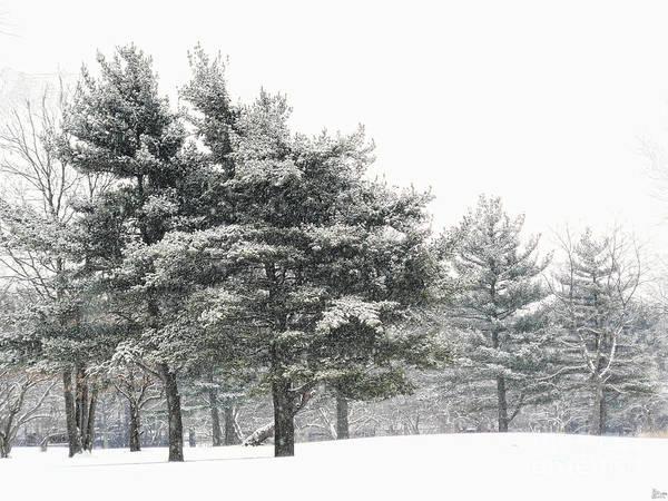Photograph - Let It Snow by Jeff Breiman