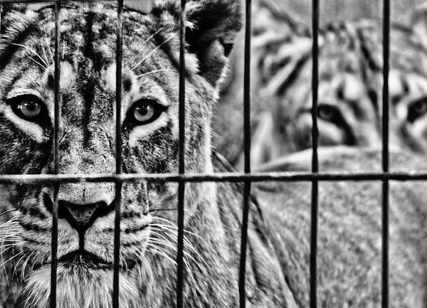 Sascha Wall Art - Photograph - Let Me Out by Sascha Richartz