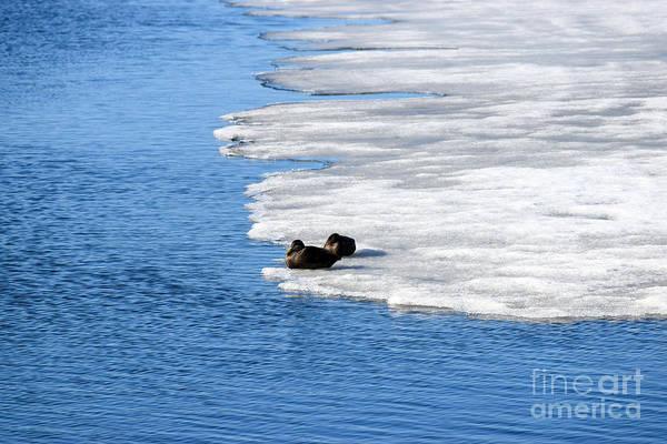 Madawaska Lake Photograph - Let Sleeping Ducks Lie by William Tasker