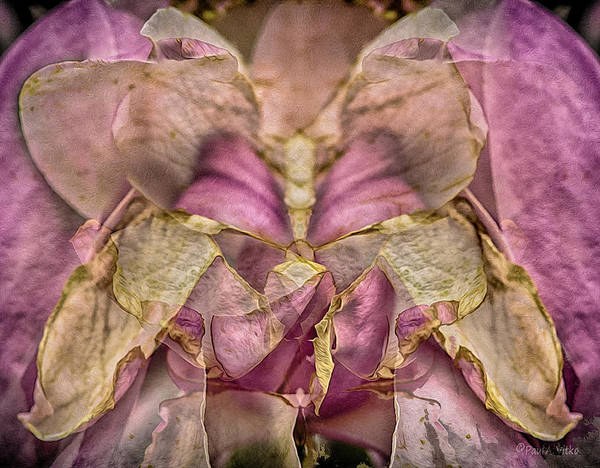 Photograph - Lether Butterfly Or Not by Paul Vitko