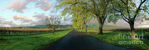 Wall Art - Photograph - Let's Drive Through The Vineyard by Jon Neidert