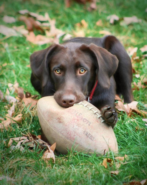 Sienna Photograph - Let's Play Football by Lori Deiter