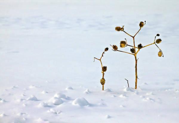 Dof Photograph - Let's Stick Together by Evelina Kremsdorf