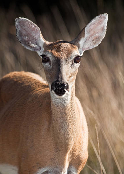 Wall Art - Photograph - Lets Talk I'm All Ears by Jeff Abrahamson