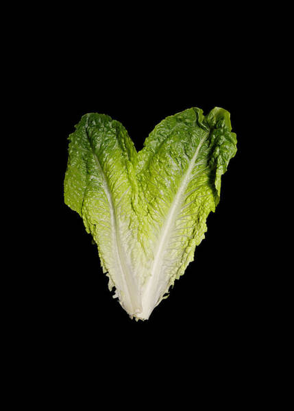 Photograph - Lettuce Heart by Richard Reeve