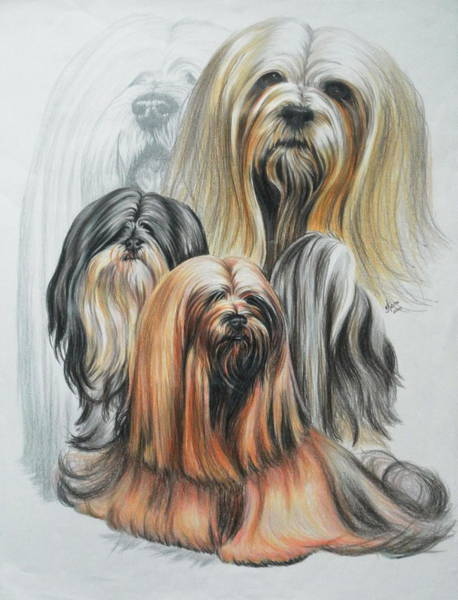 Mixed Media - Lhasa Apso Revamp by Barbara Keith