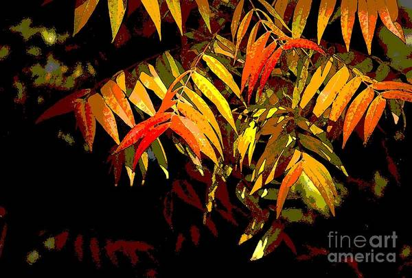 Photograph - Library Leaves by Norman Andrus