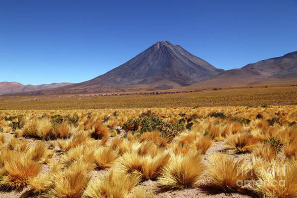 Photograph - Licancabur Volcano And High Altitude Grassland Chile by James Brunker
