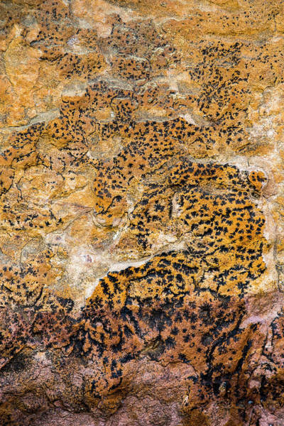 Photograph - Lichen Abstract, Bhimbetka, 2016 by Hitendra SINKAR