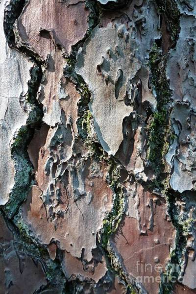 Photograph - Lichen And Moss On A Tree 10 by Jean Bernard Roussilhe