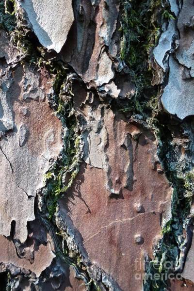 Photograph - Lichen And Moss On A Tree 9 by Jean Bernard Roussilhe
