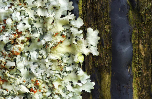Photograph - Lichen by Christopher Johnson