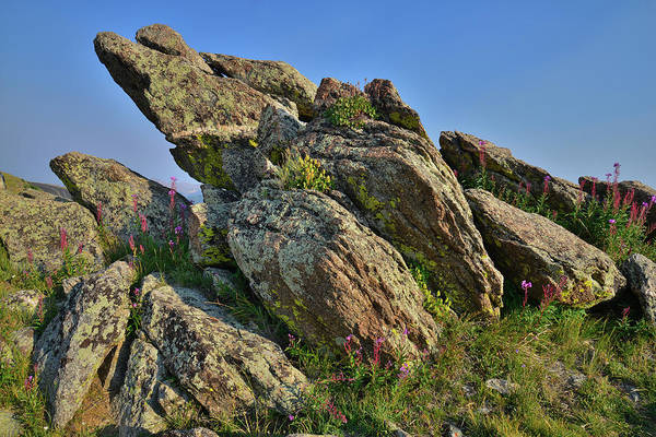 Photograph - Lichen Covered Boulders Along Mt. Evans Highways by Ray Mathis