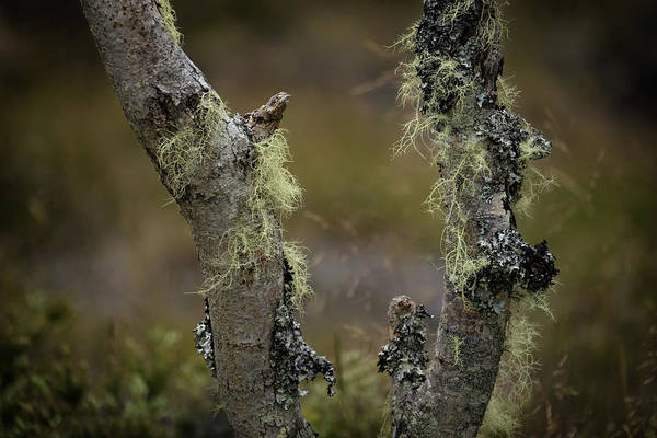 Photograph - Lichen On Tree Bark by Christopher Johnson