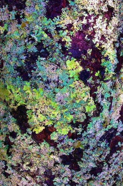 Photograph - Lichen On Tree In Maine by Polly Castor