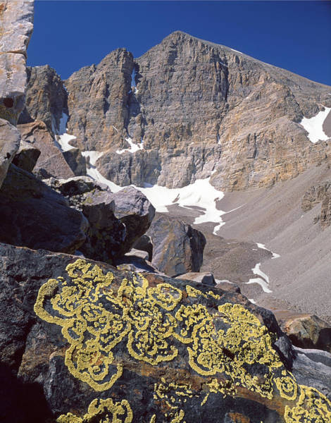 Photograph - 311364-lichen Patterns And Wheeler Peak, Nv by Ed  Cooper Photography