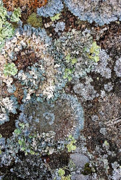 Digital Art - Lichens by Julian Perry