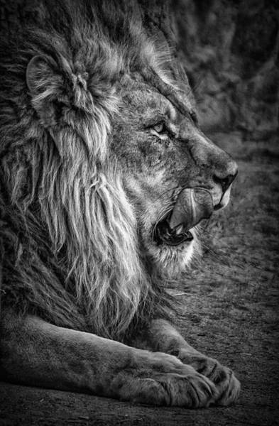 Photograph - Licking His Chops by Elaine Malott