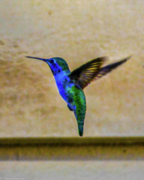 Norco Photograph - Lidia's Summer Hummingbird by Tommy Anderson