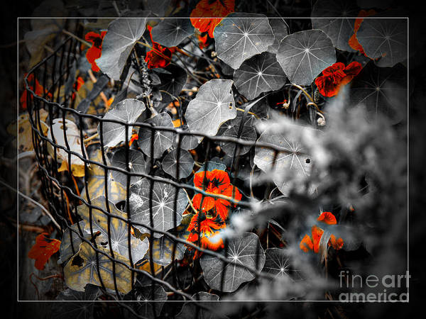 Photograph - Life Behind The Wire by Lance Sheridan-Peel