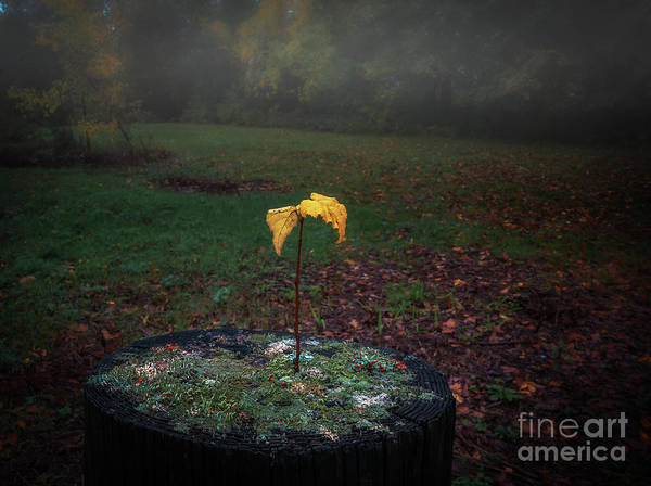 Reborn Wall Art - Photograph - Life Comes Full Circle by Scott Thorp
