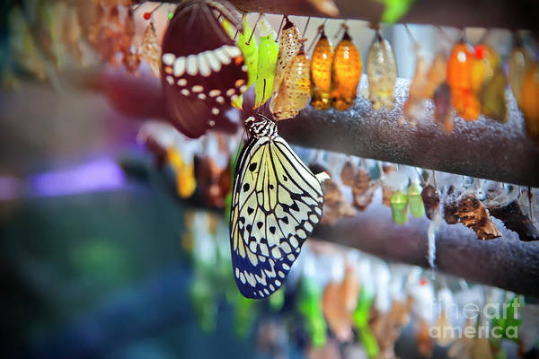 Photograph - Life Cycle Of Butterfly by Ariadna De Raadt