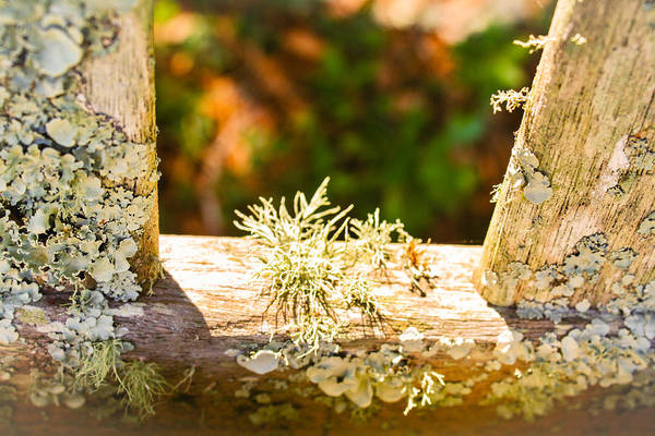 Photograph - Life Finds A Way by Stacey Rosebrock