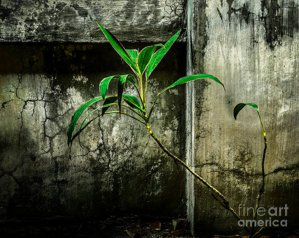 Photograph - Life Goes On by Michael Arend