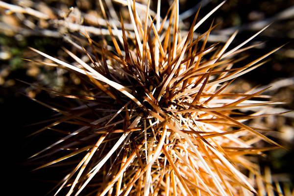 Mojave Photograph - Life by Hyuntae Kim