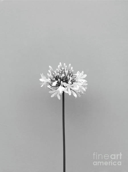 Photograph - Life In Gray by Fei A