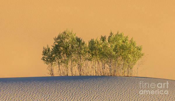 Death Valley Np Photograph - Life In The Desert, Death Valley National Park by Henk Meijer Photography