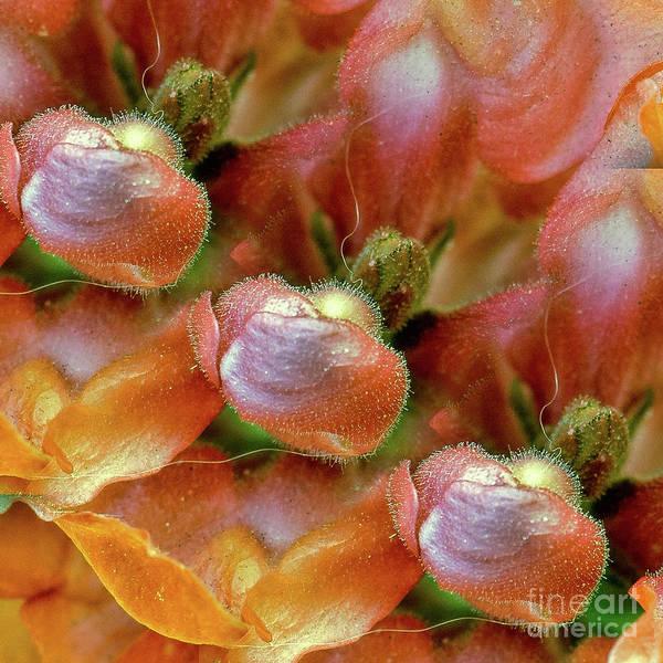 Photograph - Life Inside A Flower by Susan Warren