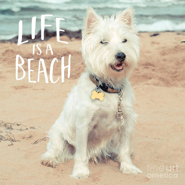 Photograph - Life Is A Beach Dog Square by Edward Fielding