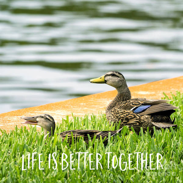 Life Together Photograph - Life Is Better Together Square by Edward Fielding