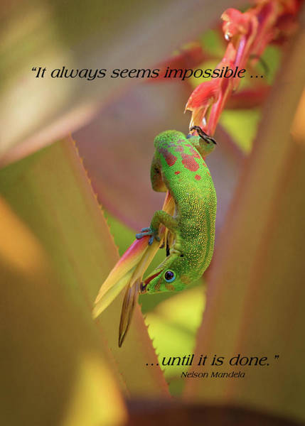 Photograph - Life Lessons From A Gecko #1 by Susan Rissi Tregoning