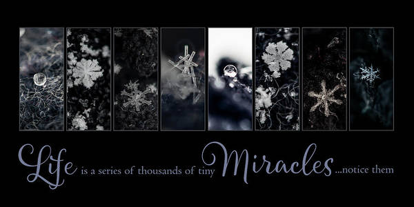 Photograph - Life Miracles by Christina VanGinkel