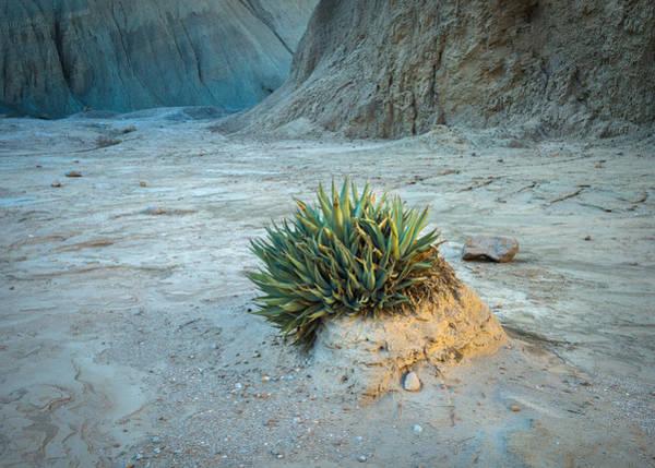 Photograph - Life On Mars by Alexander Kunz