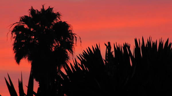 Wall Art - Photograph - Life With Sunset by Donna Zoll