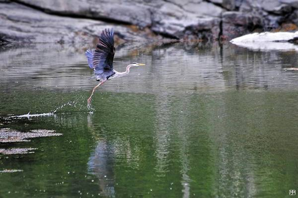 Photograph - Lift Off by John Meader