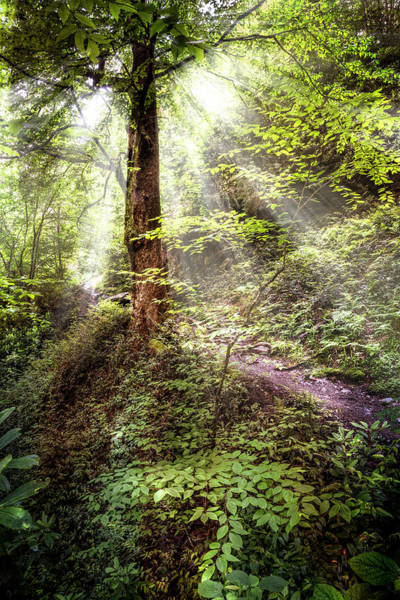 Photograph - Light Along The Trail by Debra and Dave Vanderlaan