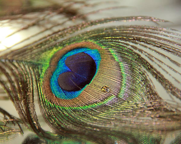 Photograph - Light And Feathers by Angela  Murdock