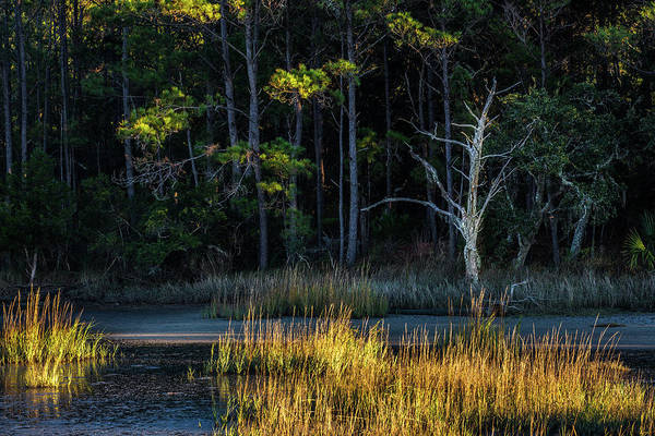 Photograph - Light And Shadows - Dewees Island, Sc by Donnie Whitaker