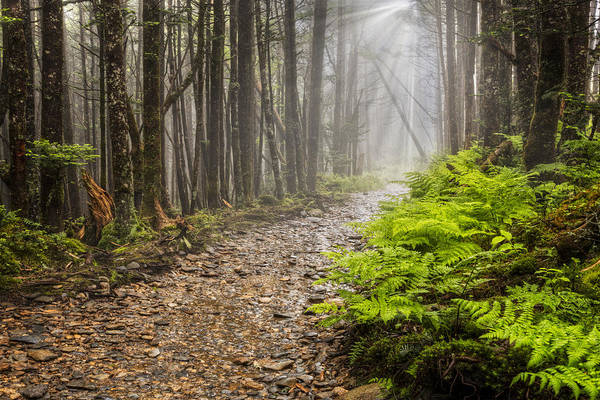 The Great Smoky Mountains Wall Art - Photograph - Light Beams by Debra and Dave Vanderlaan