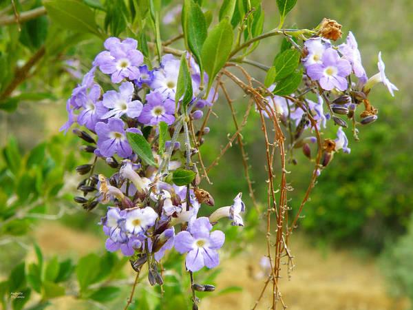 Photograph - Purple Flowers by Augusta Stylianou