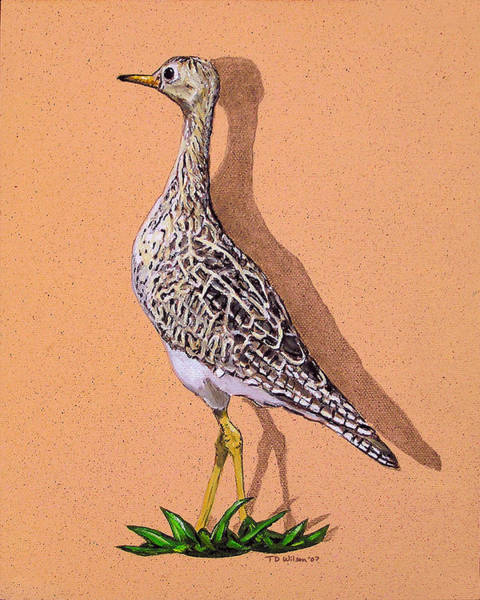 Painting - Light Capture Of A Pectoral Sandpiper by TD Wilson