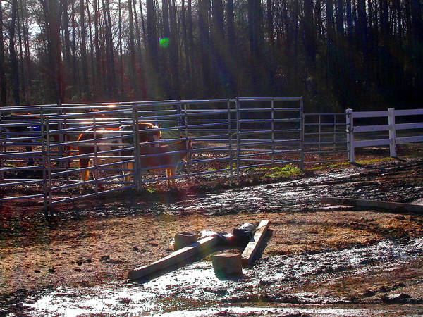 Photograph - Light Drenched Morning Corral by Anne Cameron Cutri